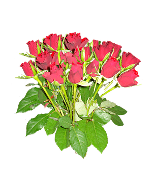 Nosegay, Roses, Red