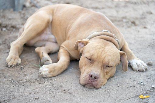 Pet, Dog, Puppy, Animal, Cute, Nature