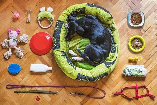 Dog, Pet, Dog Bed, Dog Toy, Dog Food, Dog Leash