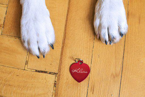 Dog, Dog Tag, Dog Id, Dog Identification, Dog Love