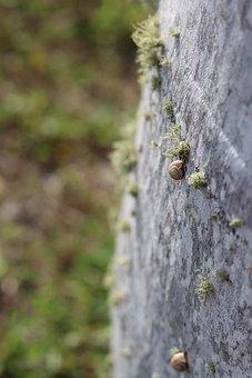 Snail, Molluscs, Lichen, Slow, Crawl, Nature, Gastropod