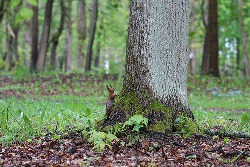 Tree, Oak, Nature, Green, Branch, Park, Squirrel
