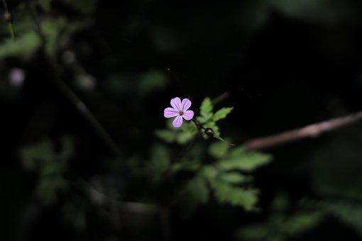 Flower, Pink, Shallow Depth Of Field, Shallow Dof