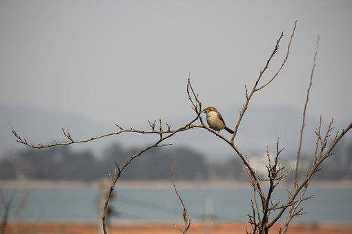 Until The Value, A Small Fort, Resident Bird