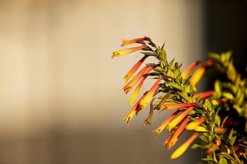 Flower, Flowers, Detail, Nature, Spring