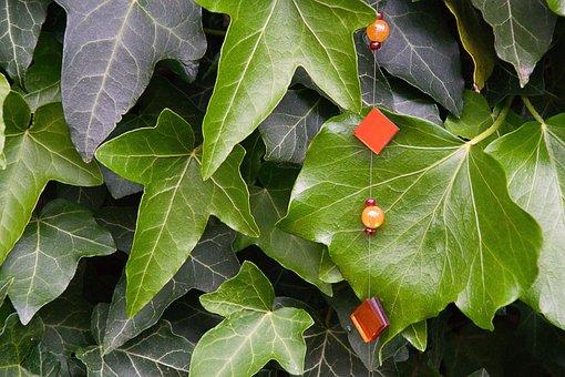 Ivy, Green, Climber Plant, Garden