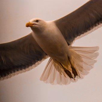 Seagull, Bird, Animal, Flying, Feathers