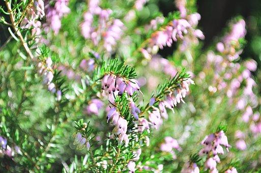 Purple, Colorful, Bloom, Flowers