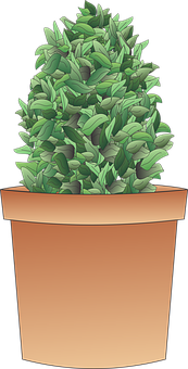 Shrub, Plant, Tree, Herb, Potted, Pot
