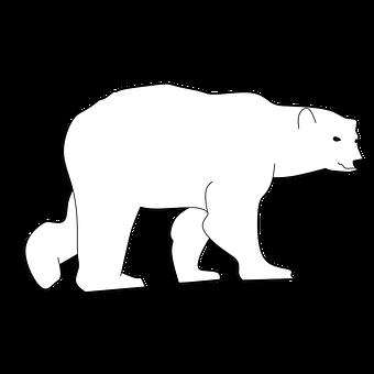 Bear, Animal Head, Animal, Animal Body