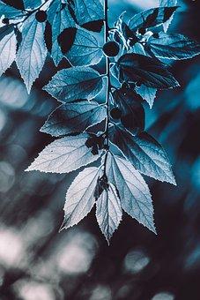 Plant, Nature, Flower, Plants, Garden, Flowers, Spring