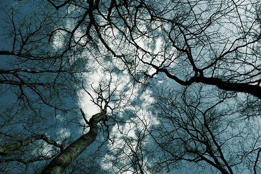 Tree, Trees, From Underneath, Forest, Nature, Winter