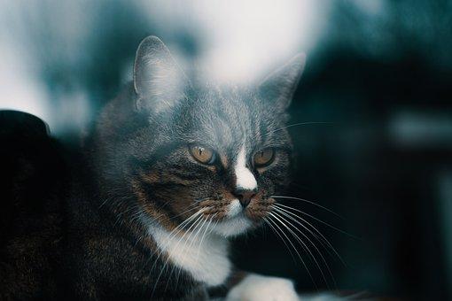 Cat, Cats, Reflection, Window, Pet, Animal, Mammal
