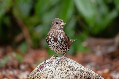 Bird, Sparrow, Garden, Sparrows, Birdie