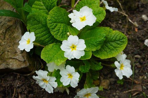 Spring, Blossom, Nature, Garden, Botany, Bloom, Lantana