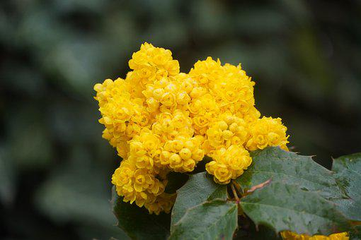 Lantana Flower, Spring, Blossom, Nature, Garden, Botany