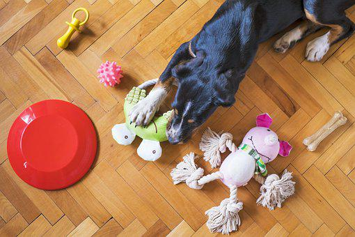 Dog Toys, Dog Playing, Dog Chew Toy