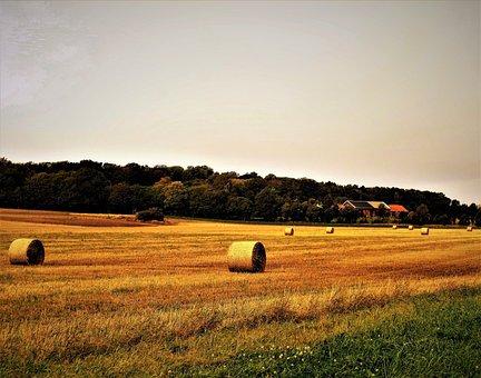 Field, Sky, Hay, Hayballs, Autumn