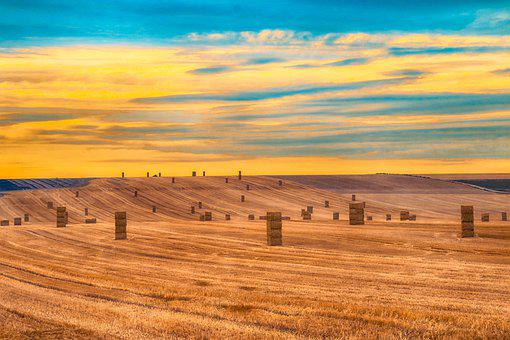 Landscape, Straw, Bed-Of-Sun
