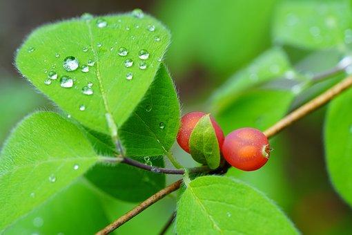 Wild, Wild Flower, Dew, Flower, Nature