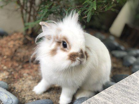 Rabbit, Bunny, Garden, Outdoors, Hare, Cute, Animal