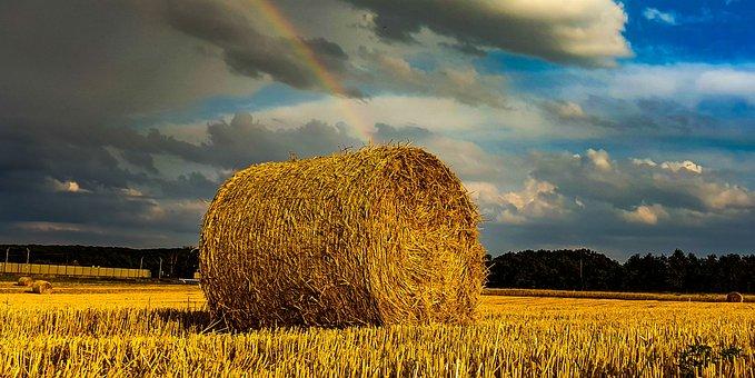 The Sheaf, Snopek, Hay, Corn, Field, Agriculture
