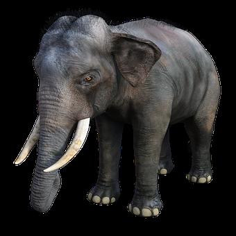 Elephant, Large, Tusks, Trunk, Africa
