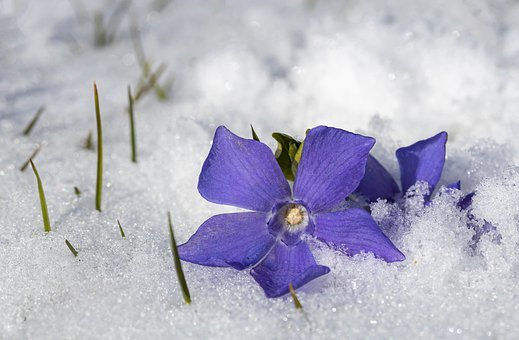 Evergreen, Snow, Snow Cover, Frost