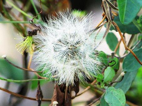 Flower, Fuzz, White, Plant, Green