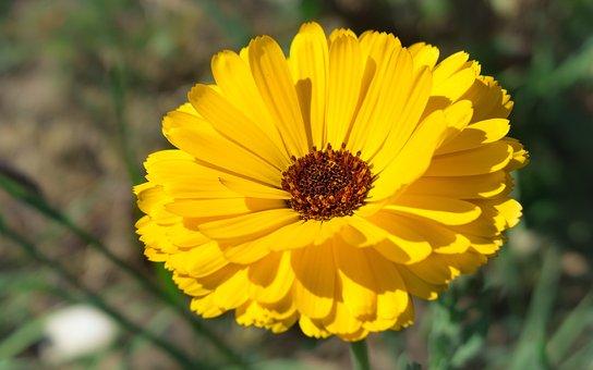 Marigold, Flower, Blossom, Bloom, Orange, Stamp, Pollen