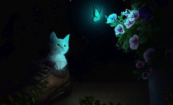 Mèo, động Vật, Bướm, Cat, Animal, Curious, Feral Cat
