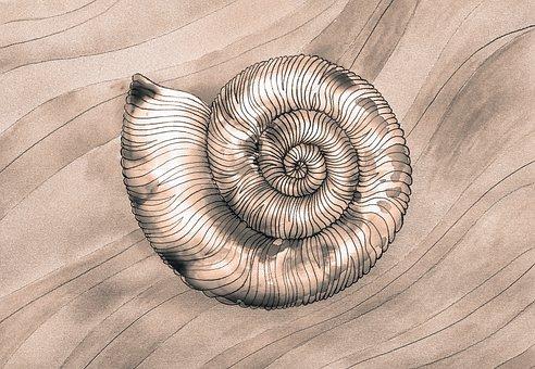 Seashells, Sink, Sand, Sea, Malus, Bc, Fossils