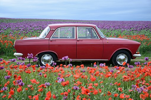 Moskvich, Red Weed, Poppyhead, Red, Flower, Nature