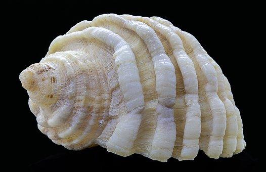 Seashell, Spiral, Aquatic, Pattern, Texture