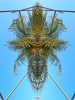Palm, Pattern, Abstract, Contrast, Exotic, Sky
