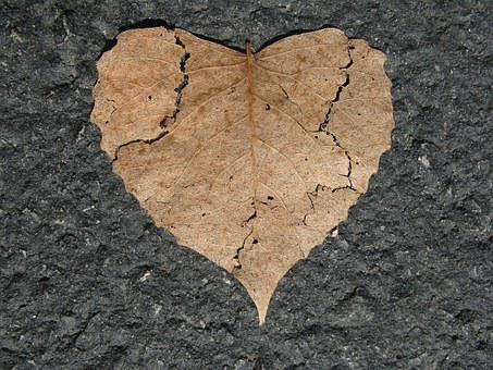 Heart, Broken, Nature Love, Shape, Leaf, Autumn, Fall