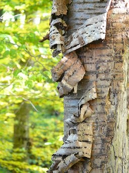 Bark, Tree Bark, Cherry, Cherry Bark, Flake, Replace