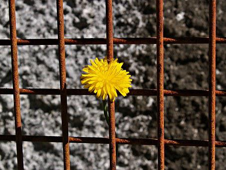 Daisy, Yellow, Rusty Metal, Frame, Grid, Rough