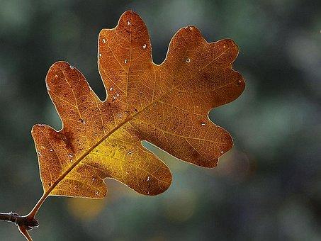 Leaf, Autumn, Frame, Transparent, Shine Through, Light