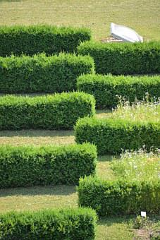 Hedge, Hedge Accounting, Structure, Lines, Garden