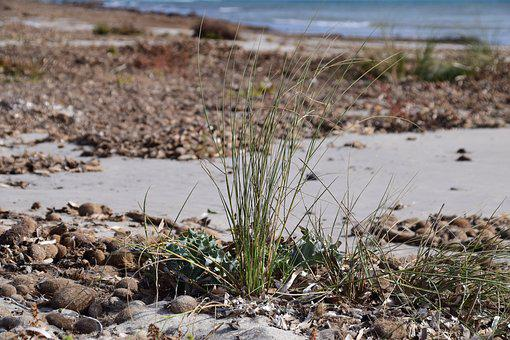 Beach, Coast, Bank, Sea, Sand, Seaweed, Grass, Close Up