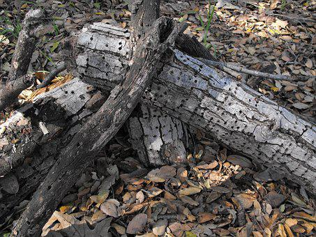 Wood, Dry, Rotted, Natural, Woodpecker, Insect, Rotting