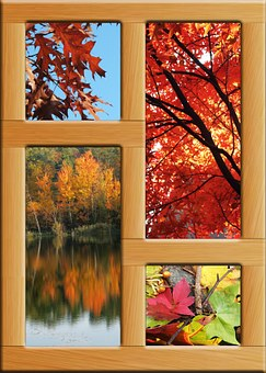 Autumn, Pond, Emerge, Deciduous Forest, Frame, Wood