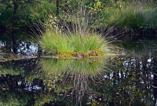 Moor, Mirroring, Water, Pietz Moor, Schneverdingen