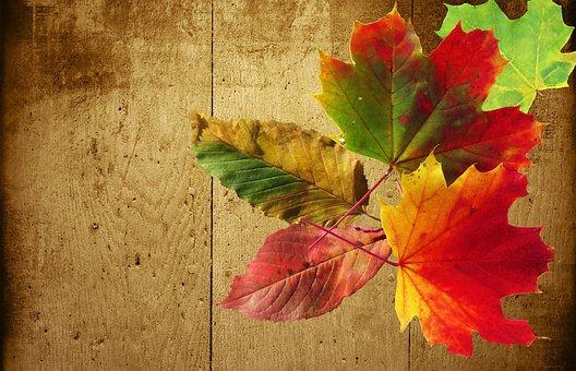 Autumn, Background, Wood, Colorful, Emerge, Wellness