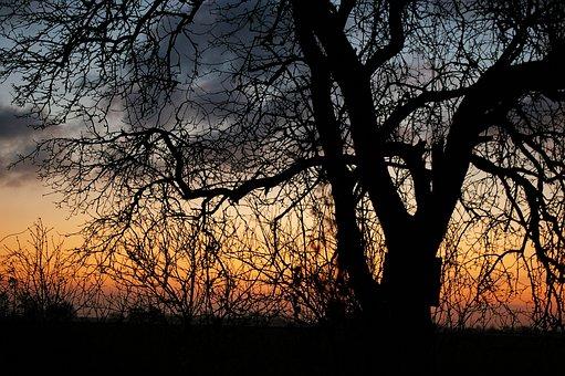 Sunrise, Good Morning, Pear, Winter, Contrast, Black