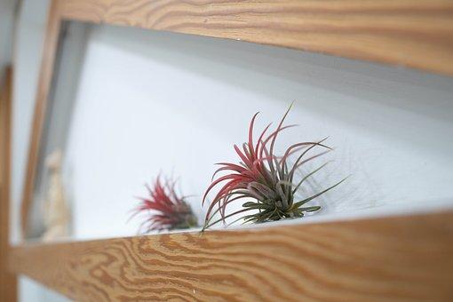 Prop, Decoration, Enjoy, Korea, Plant