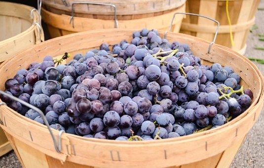Fruit, Market, Purple, Grapes, Concord, Fresh, Food