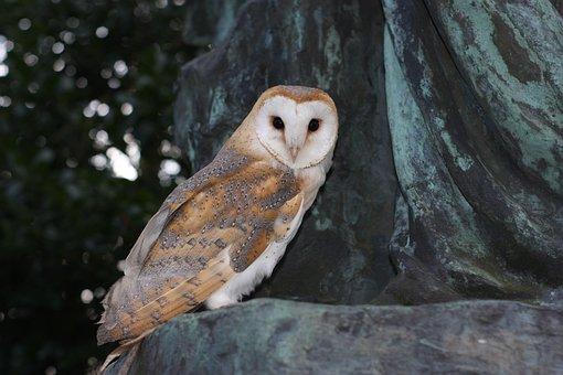 Barn Owl, Owl, Wildlife, Nature, Animal, Gravestone