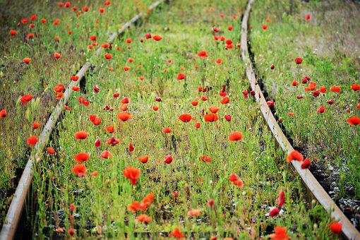 Red Poppies, Green Grass, Railway, Blooming, Romantic